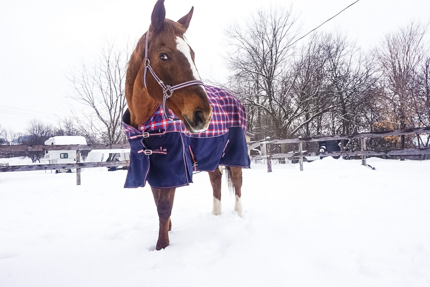 A Snowy Day At The Barn (Blogmas Day 9)