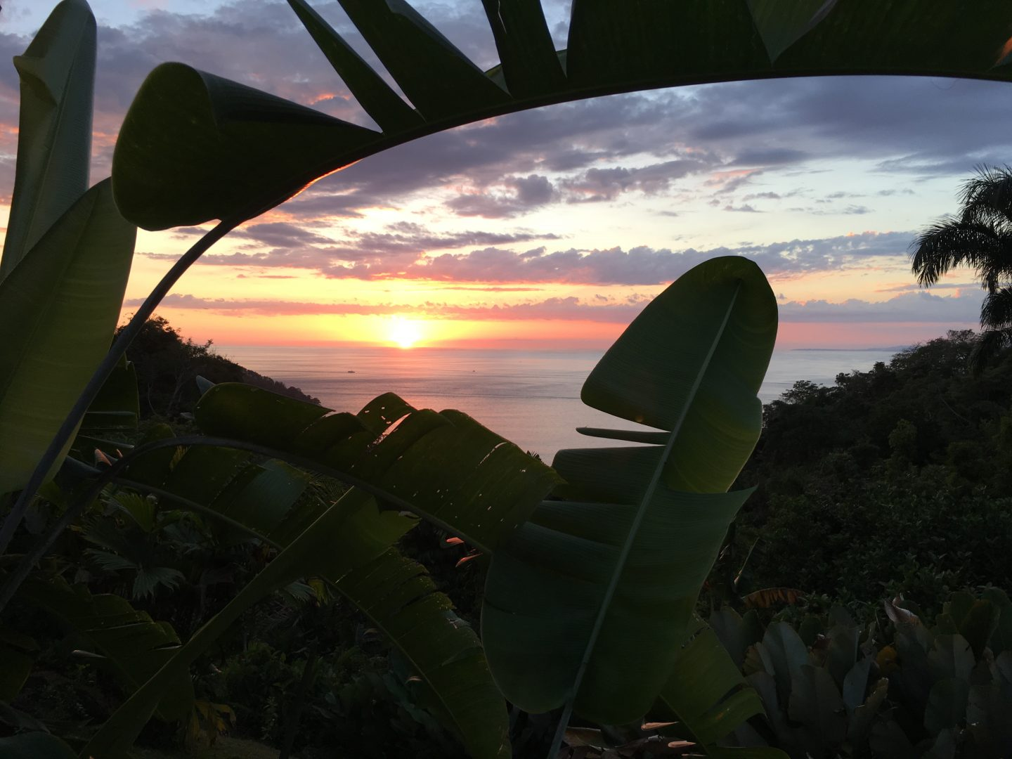 Pura Vida: A Few Days in Costa Rica